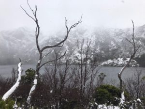 A thin spindly bare tree covered in snow in the foreground with a lake in the midground and a snowy mountain behind